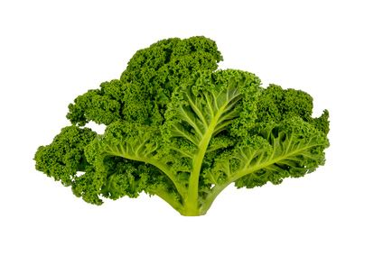 can dogs eat kale can dogs eat kale