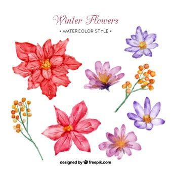 imagenes de flores invernales flor de pascua de navidad 1 descargar fotos gratis