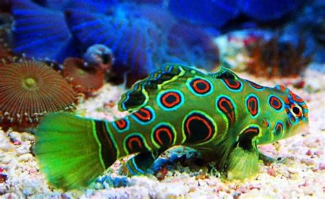 pictures of colorful fish colorful fish pics impremedia net