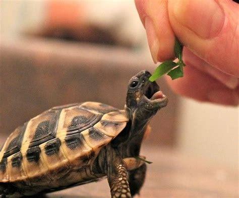 tortoise luvbat
