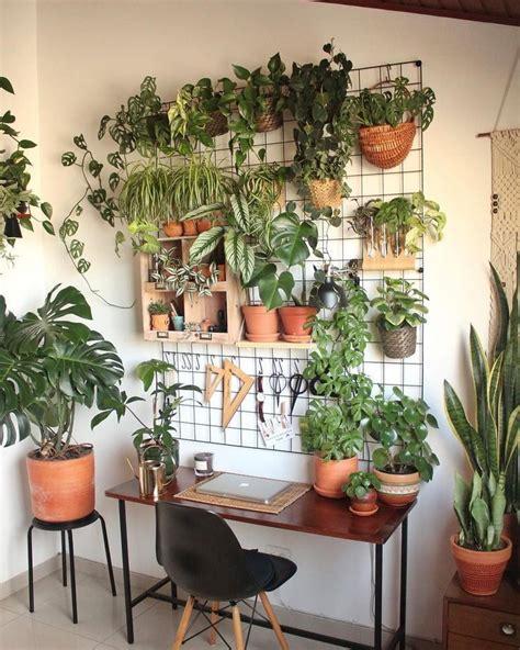 home decor  amazing wall plants decor  cozy living