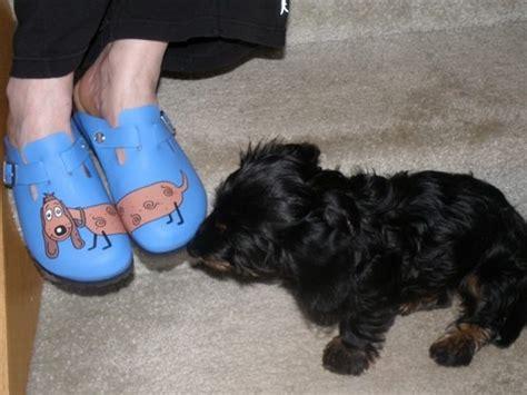 barking shoes barking shoes shoes