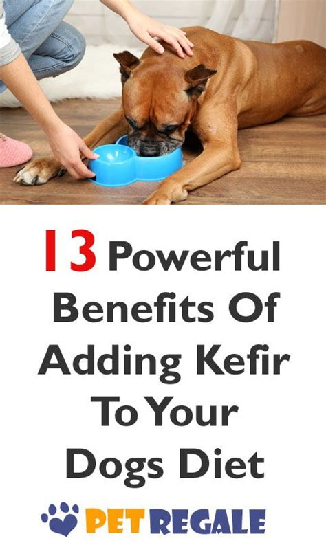 kefir for dogs 1000 images about probiotic puppies on bone broth kefir and for dogs
