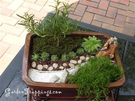 zen garten miniatur rosemary bonsai diy miniature zen garden and rosemary
