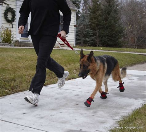 running shoes for dogs ultra paws rugged boots