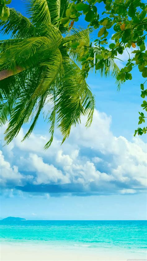tropical beach coconut tree iphone   hd wallpaper hd