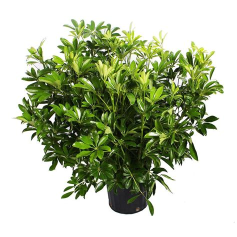 flowering house plant indoor plants garden plants