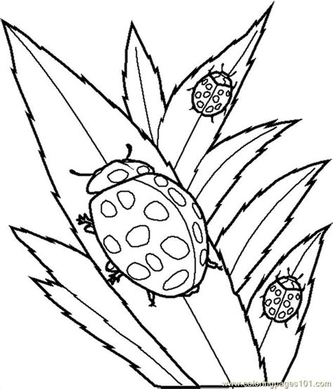 Insect Color Pages Coloring Home Bugs Coloring Pages