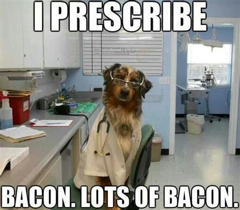 Dog Vet Meme - bacon doctor dog animal memes pinterest bacon