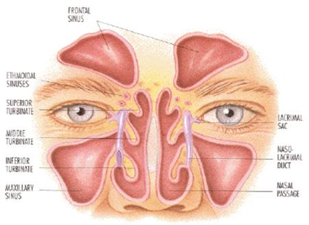 related keywords amp suggestions for nasal blockage