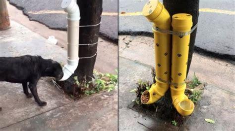 alimentadores automaticos para perros una mujer inventa un comedero para los perros de la calle