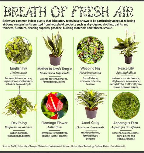 indoor plants to clean air indoor plants that actually clean the air you breathe