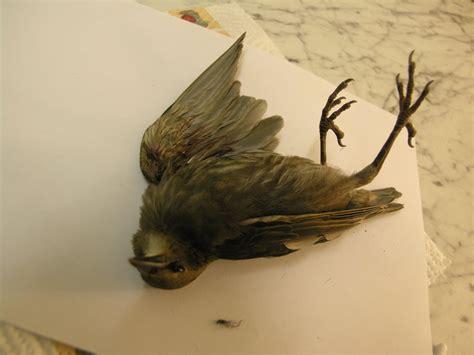 dead bird stock 37 by dark dragon stock on deviantart