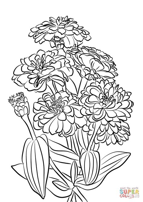 Coloring Page Zinnia by Youth And Age Zinnia Flowers Coloring Page Free