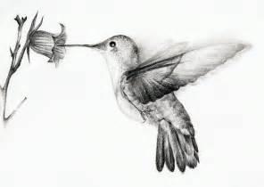 hummingbird drawing hummingbird by chatroux on deviantart
