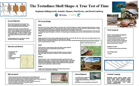 poster layout lesson plan lesson plan poster the testudine shell shape a true