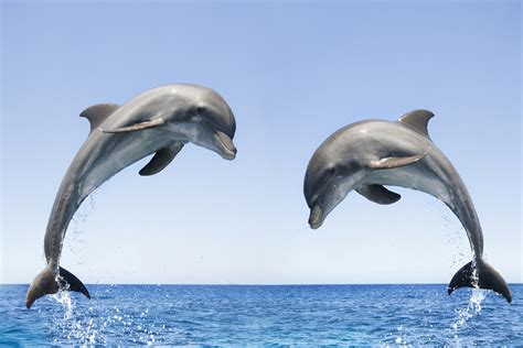 dolphin talk how we can talk with dolphins in 5 easy steps age books dolphins communicate like humans see how moonlightforall