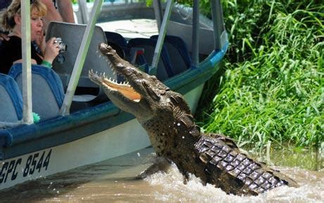 gator boat tours near me crocodile makes a lunge for german tourist telegraph