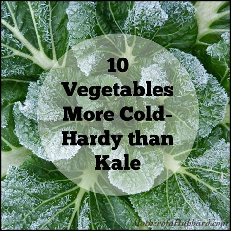 10 Vegetables More Cold Hardy Than Kale Cold Weather Vegetable Gardening