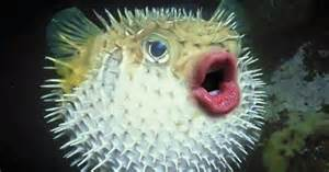 Home Design App Review newest hobby putting donald trump s mouth on pufferfish