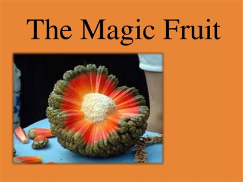 Tas Fruit Magic 1 the magic fruit