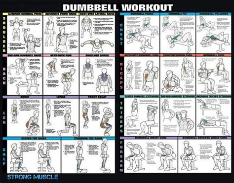 total dumbell workout health exercise tips