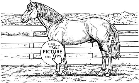 big book of horses to color dover nature coloring