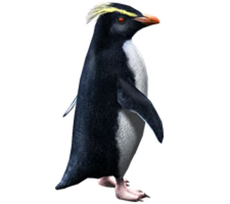 transparent things the penguin 0141197145 image 6627323 png zoo tycoon wiki fandom powered by wikia