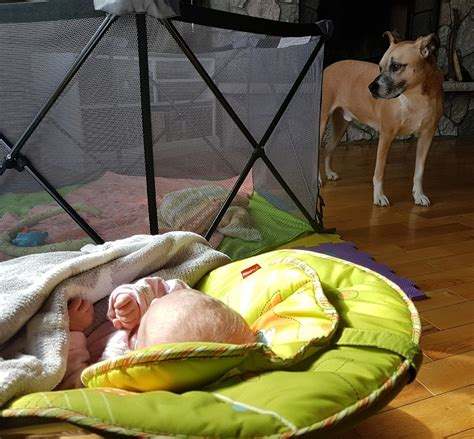 how do dogs babies how to create safe spaces for your baby and your that mutt
