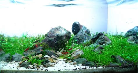Aquascape Rocks by