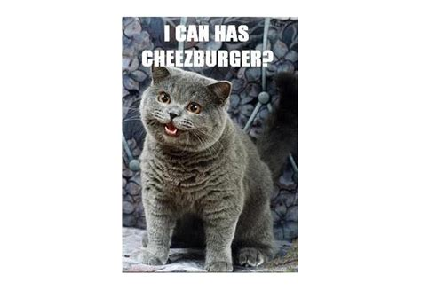 I Can Has Cheezburger Meme - i can has cheezburger cats memes