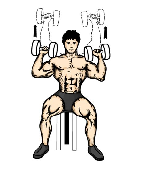 seated shoulder dumbbell press the ultimate shoulder workout routine gabou012