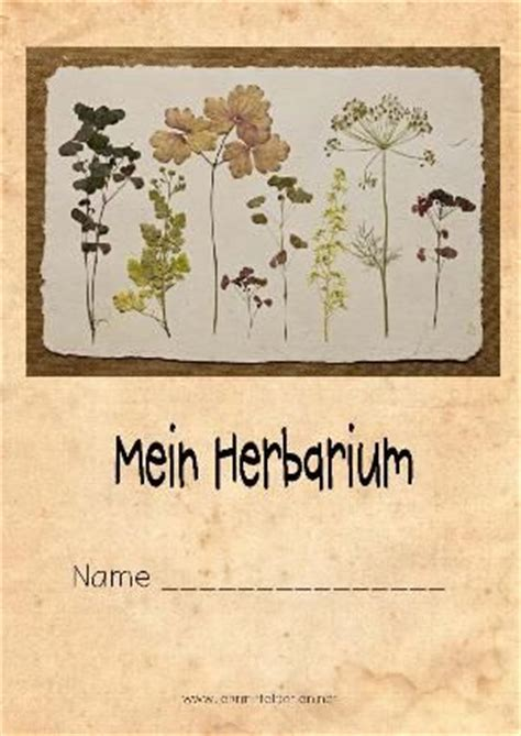 Vorlage Herbarium Word Herbarium Vorlage