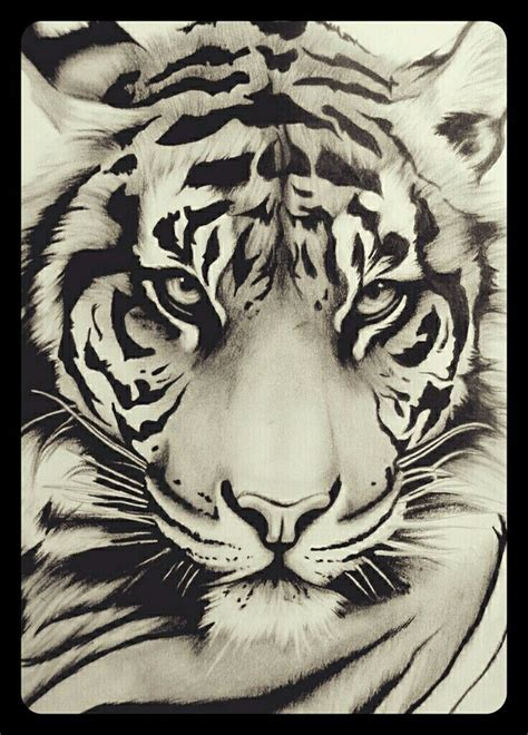 white tiger tattoo studio queenstown 35 best last studio project images on pinterest drawing