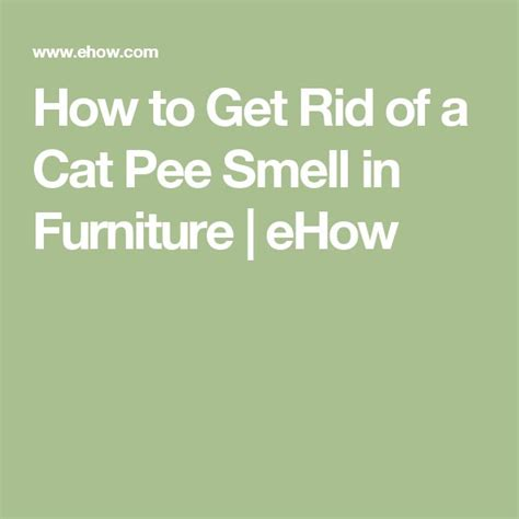 rid   cat pee smell  furniture pee smell