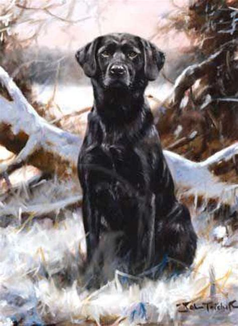 Gift Card Lab - black labrador christmas cards pack of 10 winter lab