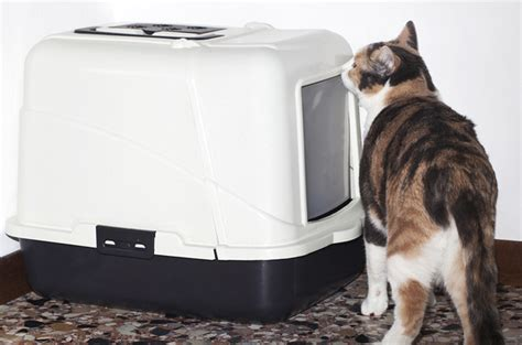 cat using bathroom outside litter box cat not using litter box these tips may clear the air