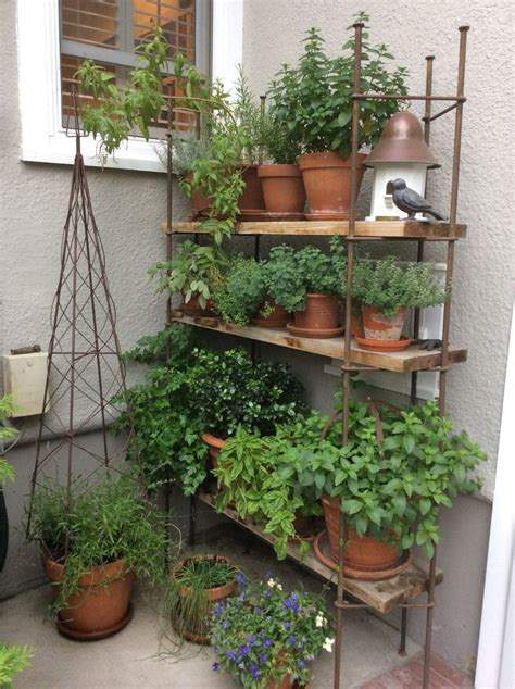 kitchen herb garden ideas 1000 ideas about kitchen herb gardens on pinterest
