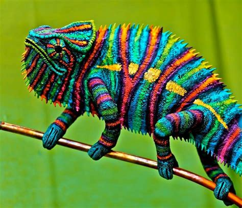 cameleon changing colors chameleon reptiles and hibians animals reptiles