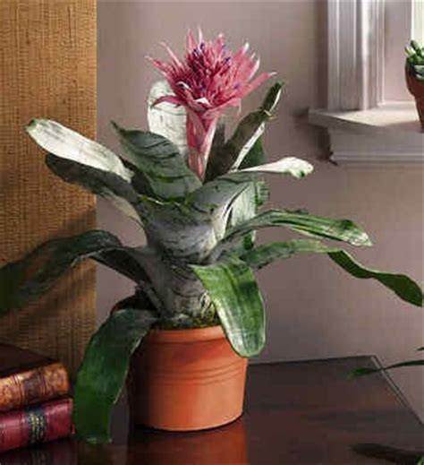 how to care for tropical house plants how to care indoor and tropical plants the journal of a