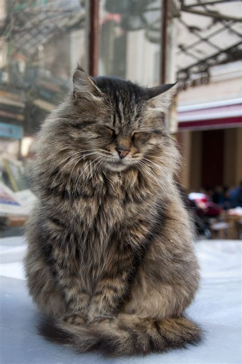 8 Reasons Why Cats Are Like Children by 10 Reasons Why You Should Never Own Maine Coon Cats