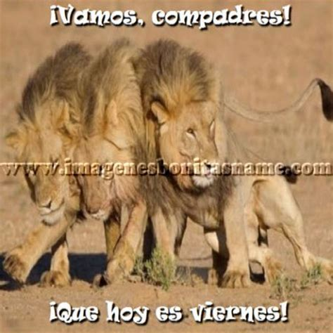 imagenes d leones con frases imagen de leones con frases imagui