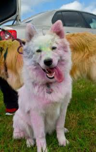 colored dogs she knew how she d look after a color run but she never