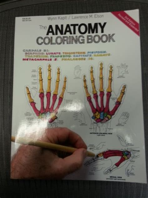 anatomy coloring book kapit the anatomy coloring book 2nd ed by kapit unique