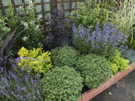 Garden Shrubs Ideas Low Maintenance Landscaping Shrubs Garden Low Maintenance Plants Landscaping