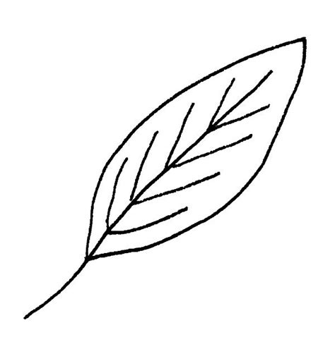 Drawing Leaves by 7 Ways To Draw Fall Leaves Designs 174