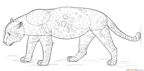 how to make a jaguar how to draw a jaguar step by step drawing tutorials