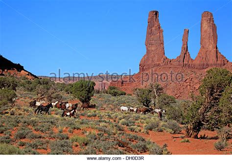monument valley mustangs monument valley utah stock photos monument valley