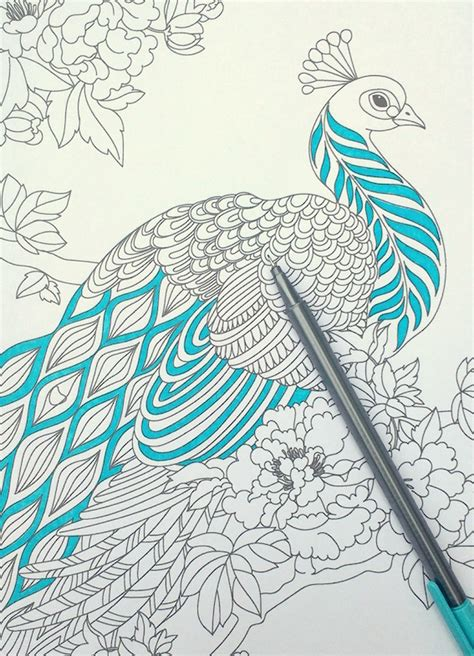 step by step coloring peacock feathers the coloring