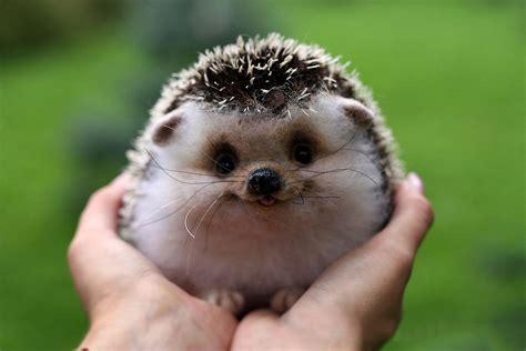 Fotos Animales Bebes Tiernos | 25 fotos de animales beb 233 s que te derretir 225 n el coraz 243 n